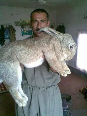 Awesome Rabbit